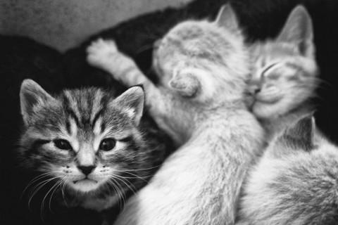 chatons_salies