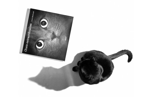 chats_extraordinaires