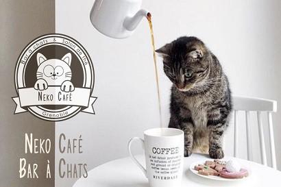 neko_cafe_grenoble_mini