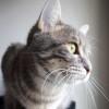 grenoblecatsitting_nephtys
