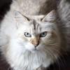 plume_grenoblecatsitting