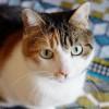 tesla_grenoblecatsitting