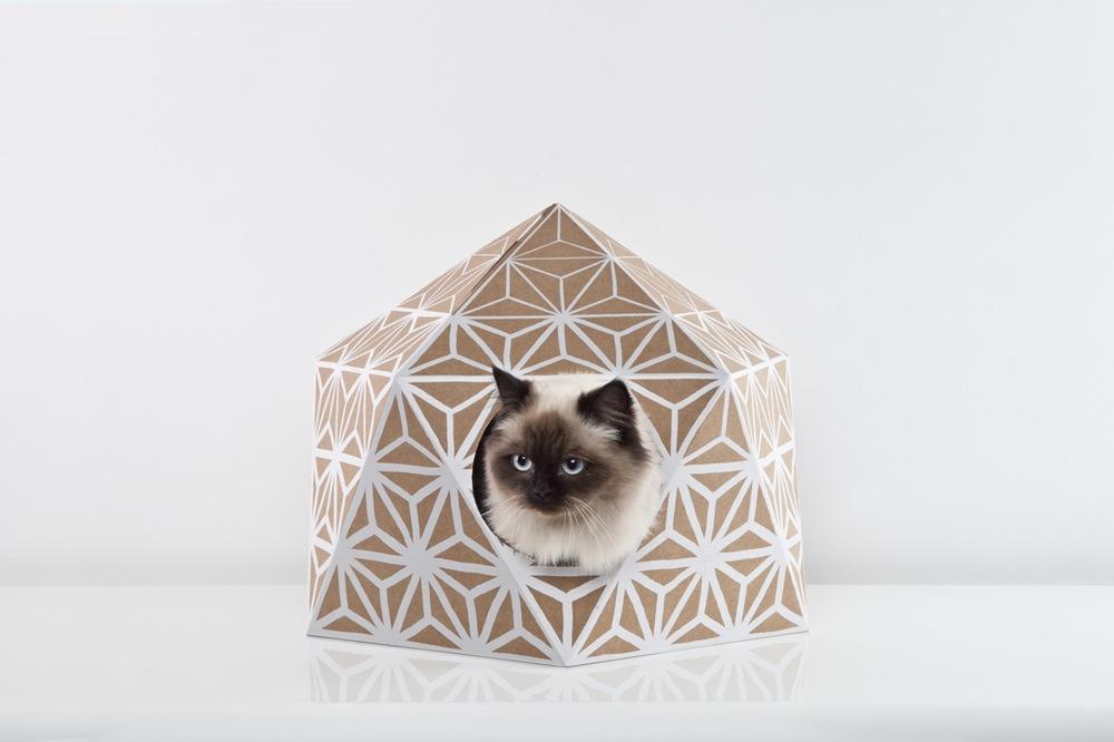 catcube-2